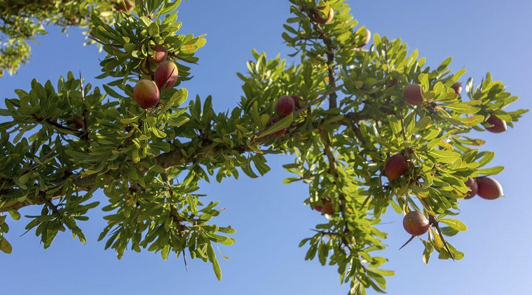 Aceite de Argán: propiedades y beneficios para tu rutina de cuidado natural
